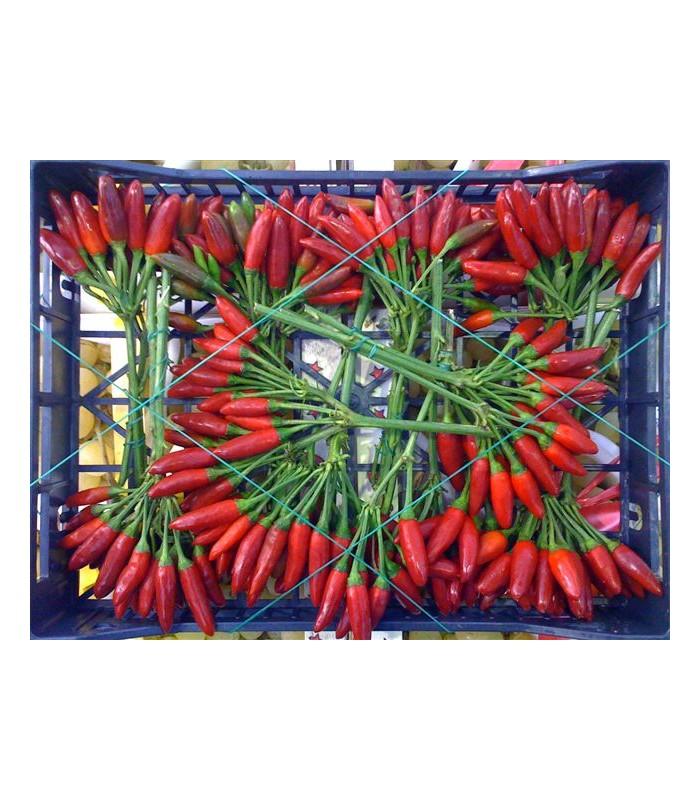 Peperoncino rosso 8 mazzetti