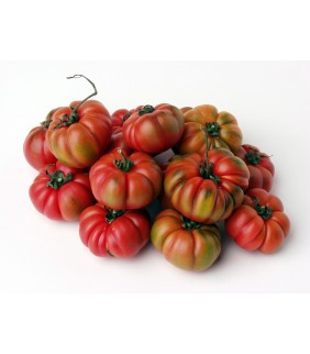 Pomodoro Costoluto 4kg