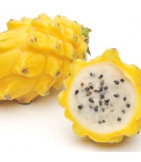 Pitaya gialla via aerea 2kg
