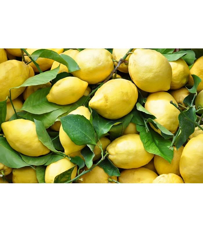Limoni Primofiore di Sicilia 2kg