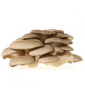 Funghi Pleorotus...