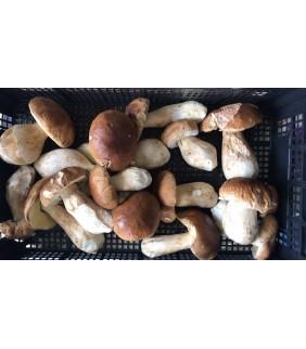 Funghi Porcini 1kg