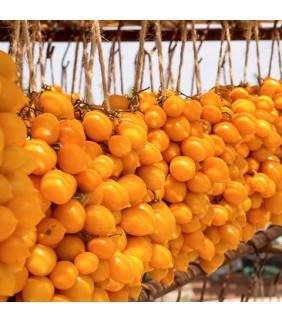 Pomodoro Piennolo giallo...