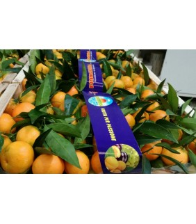 Clementine Metaponto 5kg