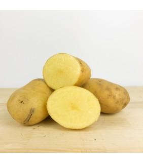 Patate agata pasta gialla 15kg