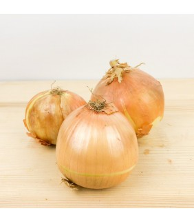 Cipolle dorate 5 kg