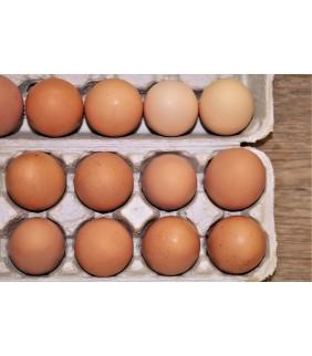 Uova allevamento a terra x10
