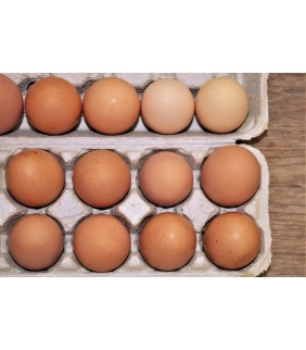 Uova allevamento a terra