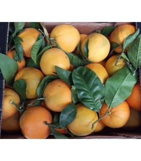 Arancia Bionda Navel 6kg