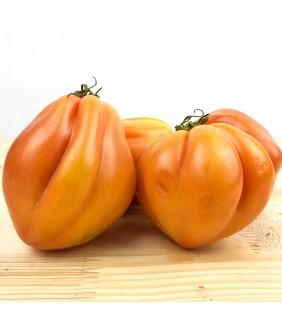 Pomodori Cuore di Bue 4Kg+