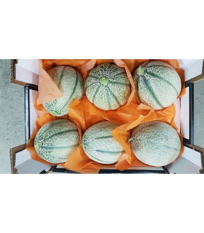 Melone Cantalupo retato 6 frutti